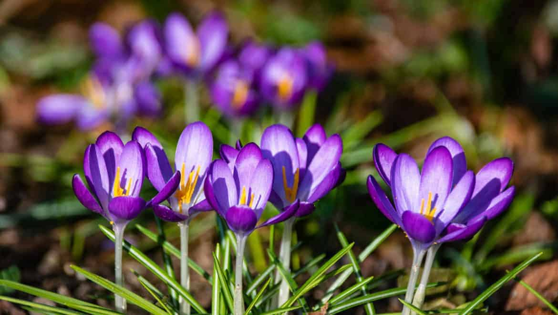 annual flowers-trail-creek-nursery