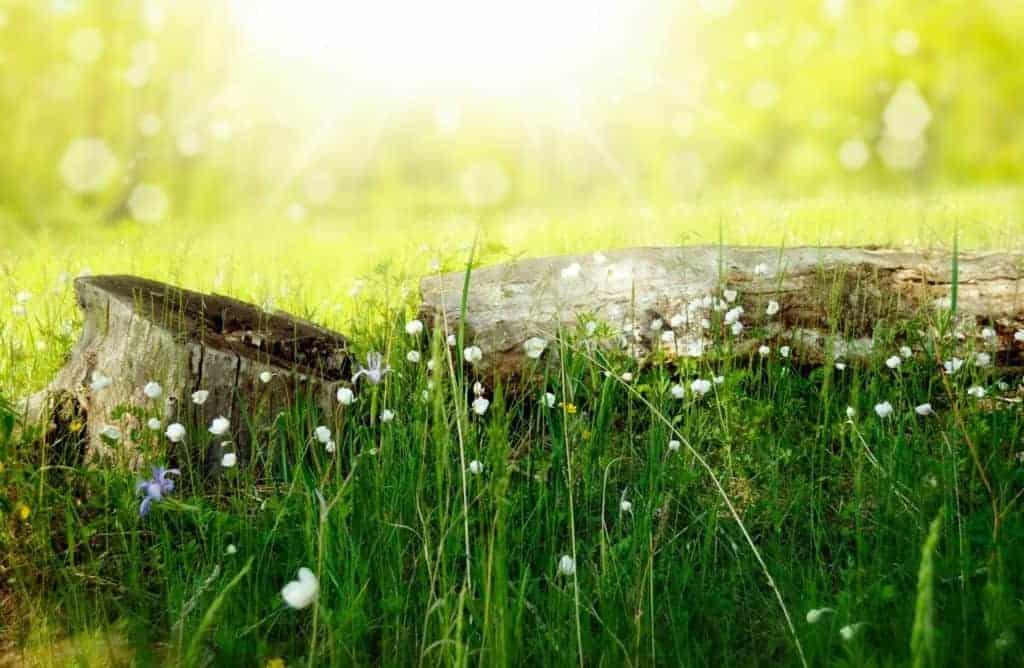 organic lawn care image