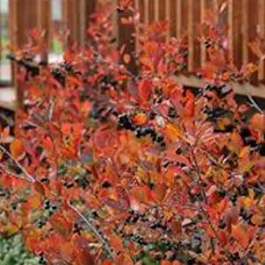 Chikebery Autumn Magic